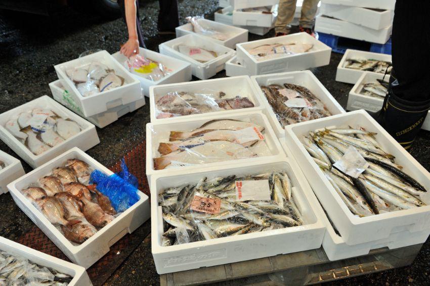 新潟の海の幸を中心に、旬の魚が続々と並べられます